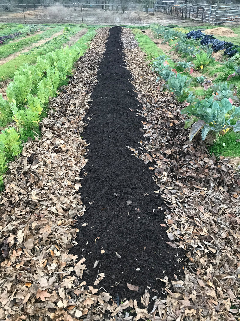 Field plot with cardboard and compost with leaves in the walkway at Ronin Farm