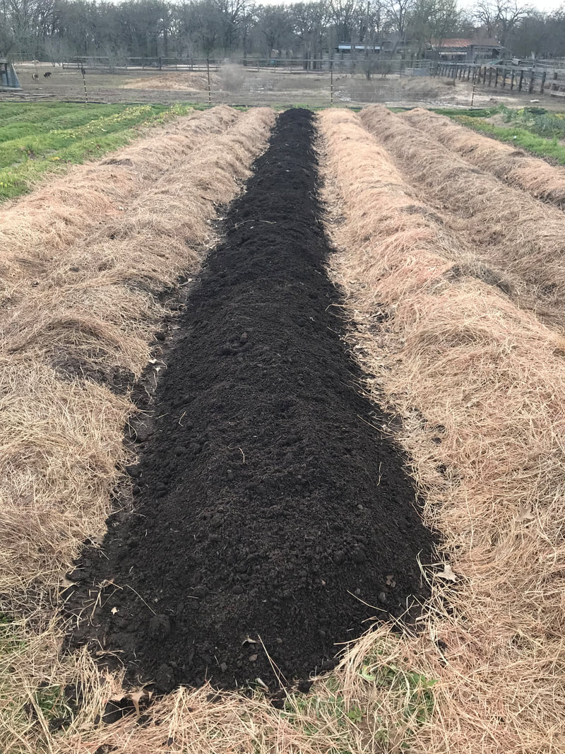 Field plots with compost and hay on top